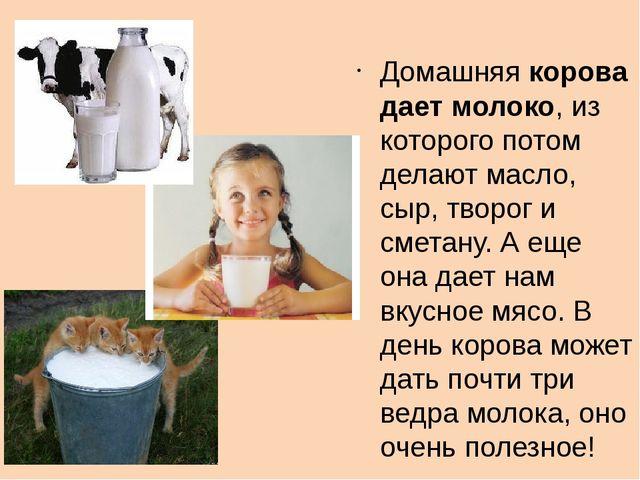 Домашняя корова дает молоко, из которого потом делают масло, сыр, творог и см...