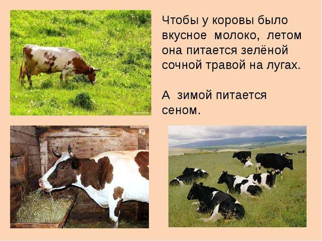 Чтобы у коровы было вкусное молоко, летом она питается зелёной сочной травой...