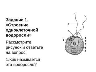 Задание 1. «Строение одноклеточной водоросли» Рассмотрите рисунок и ответьте