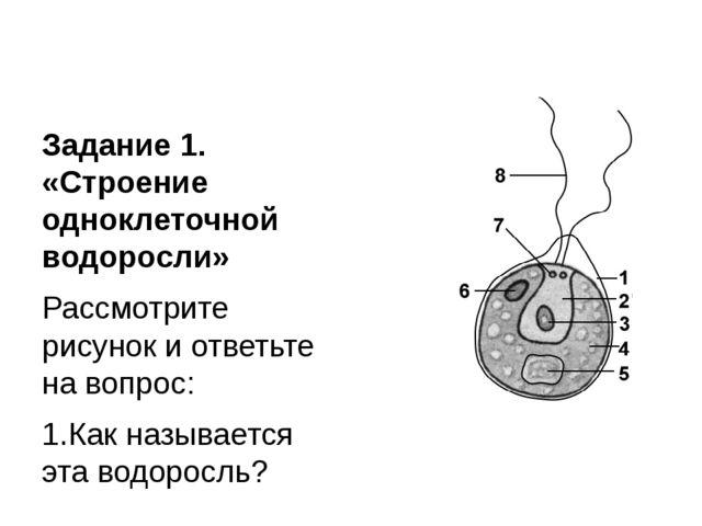 Задание 1. «Строение одноклеточной водоросли» Рассмотрите рисунок и ответьте...