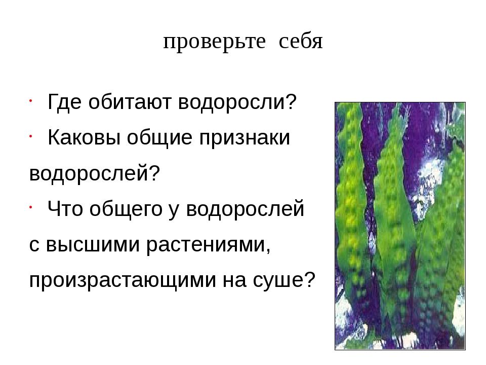 Где обитают водоросли? Каковы общие признаки водорослей? Что общего у водорос...