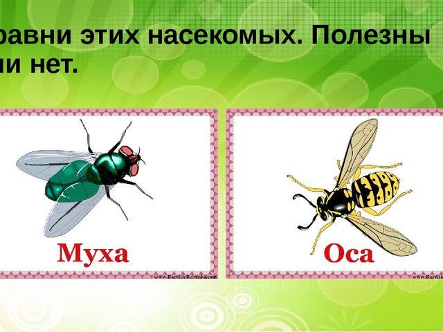 Сравни этих насекомых. Полезны или нет.