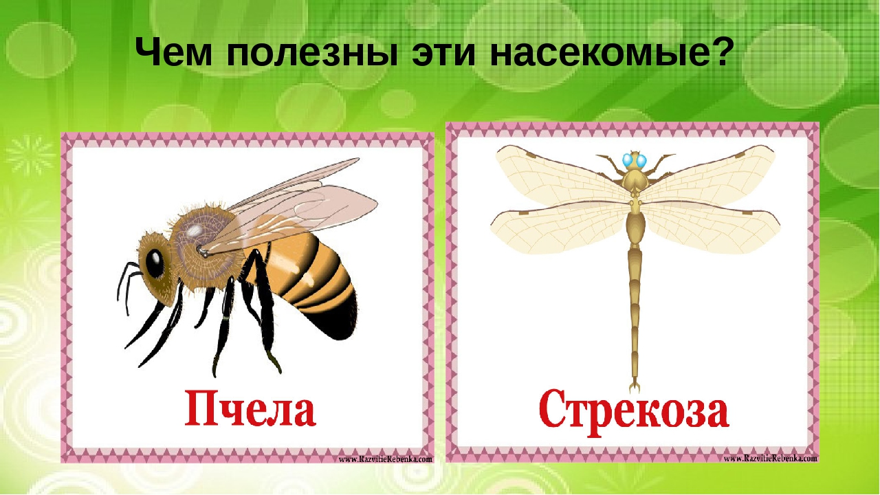 Чем полезны эти насекомые?