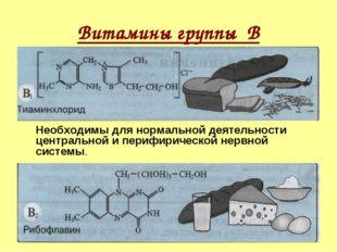 Витамины группы В Необходимы для нормальной деятельности центральной и периф