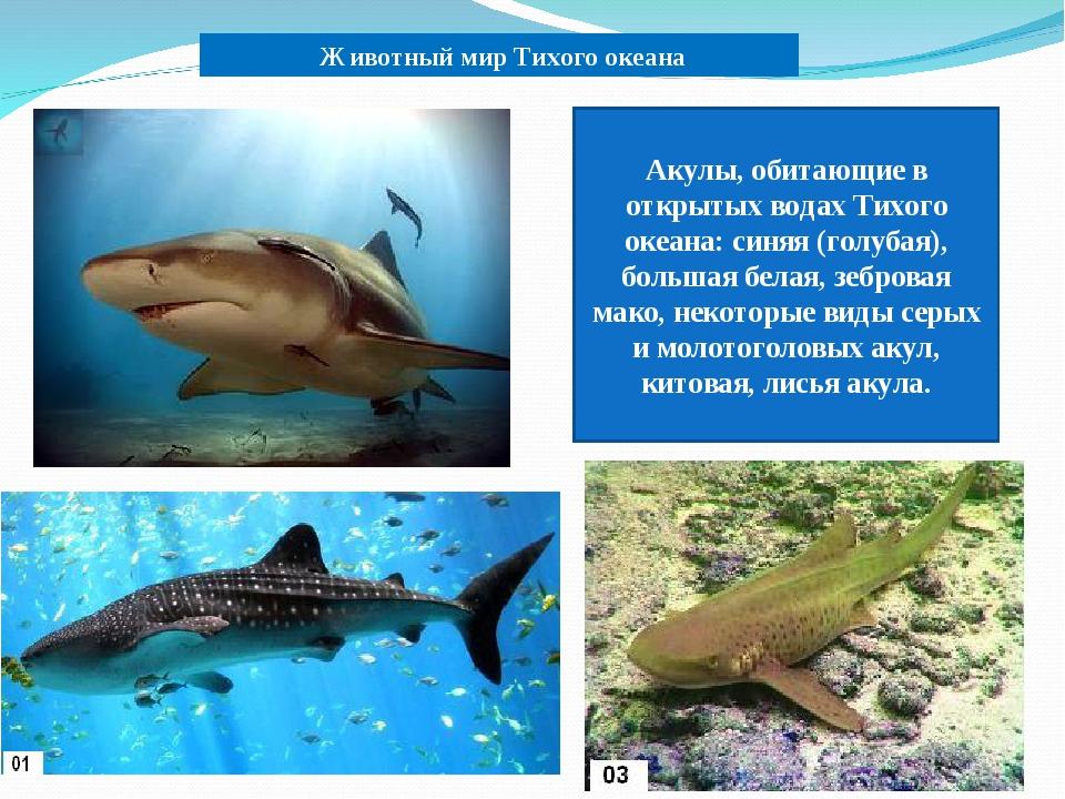 Животный мир Тихого океана Акулы, обитающие в открытых водах Тихого океана:...