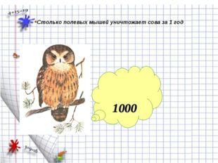 1000 Столько полевых мышей уничтожает сова за 1 год