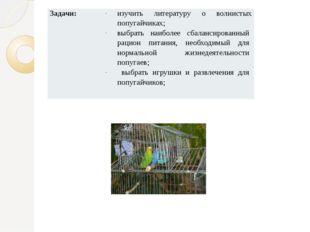Задачи: изучить литературу о волнистых попугайчиках; выбратьнаиболее сбаланси