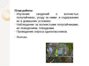 План работы: Изучение сведений о волнистых попугайчиках, уходу за ними и соде