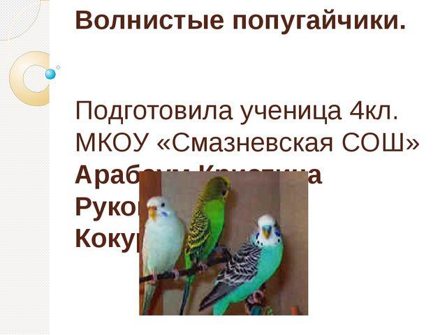 Волнистые попугайчики. Подготовила ученица 4кл. МКОУ «Смазневская СОШ» Арабау...