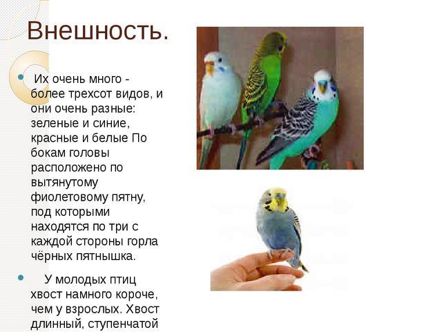 Внешность. Их очень много - более трехсот видов, и они очень разные: зеленые...
