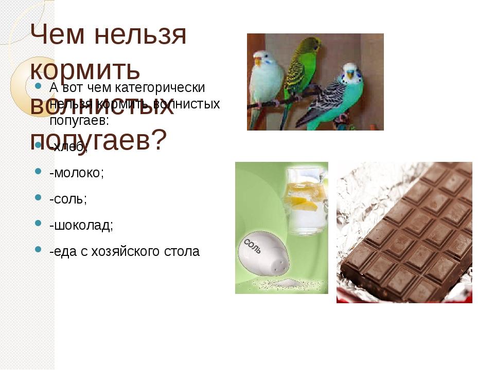 Чем нельзя кормить волнистых попугаев? А вот чем категорически нельзя кормить...