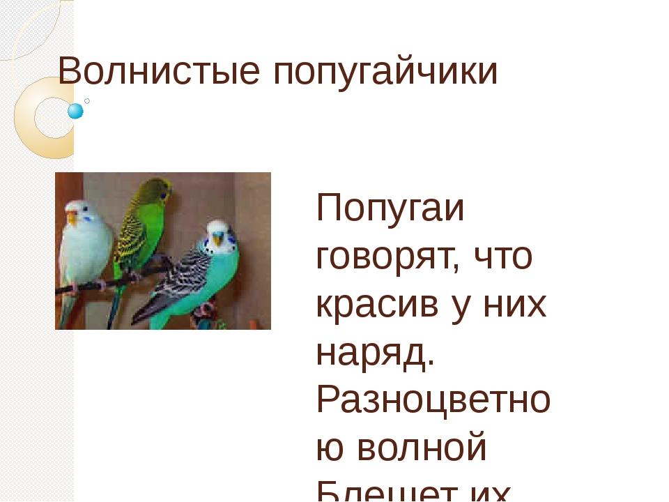 Волнистые попугайчики Попугаи говорят, что красив у них наряд. Разноцветною в...