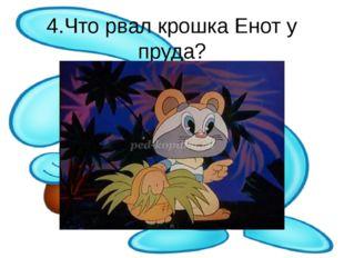 4.Что рвал крошка Енот у пруда?