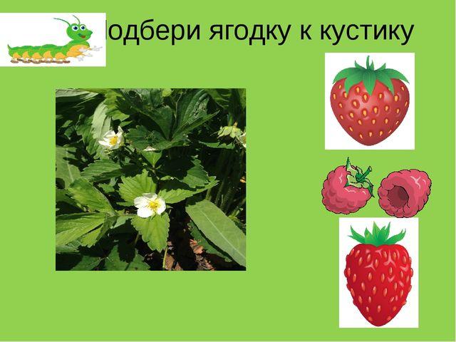 Подбери ягодку к кустику