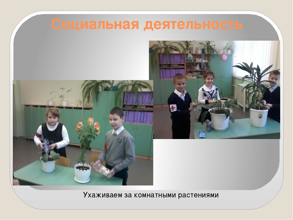Социальная деятельность Ухаживаем за комнатными растениями