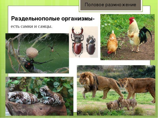 Раздельнополые организмы- Половое размножение есть самки и самцы.