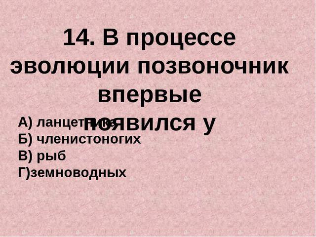 14. В процессе эволюции позвоночник впервые появился у А) ланцетника Б) члени...