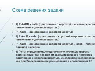 Схема решения задачи 1) P AABB x aabb (однотонные с короткой шерстью скрестил