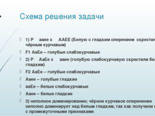 Схема решения задачи 1) P ♀ aaee x ♂ AAEE (Белую с гладким оперением скрестил