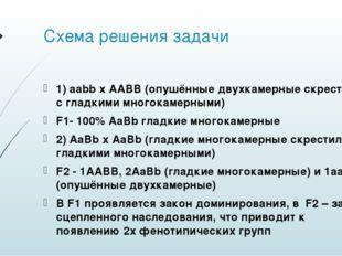 Схема решения задачи 1) aabb x AABB (опушённые двухкамерные скрестили с гладк
