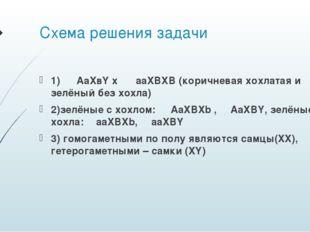 Схема решения задачи 1) ♀ AaXвY x ♂ aaXBXB (коричневая хохлатая и зелёный без