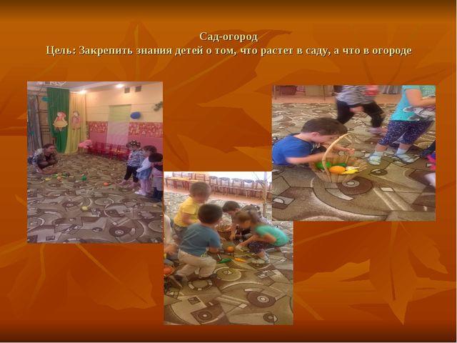 Сад-огород Цель: Закрепить знания детей о том, что растет в саду, а что в ого...