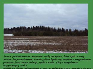 Лесная растительность защищает почву от эрозии , дает кров и пищу многим дики