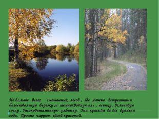 Но больше всего смешанных лесов , где можно встретить и белоствольную березку