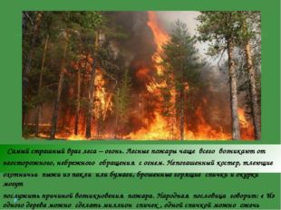Самый страшный враг леса – огонь. Лесные пожары чаще всего возникают от неос