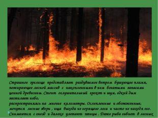 Страшное зрелище представляет раздуваемое ветром бушующее пламя, пожирающее л