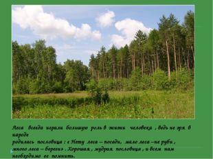 Леса всегда играли большую роль в жизни человека , ведь не зря в народе родил