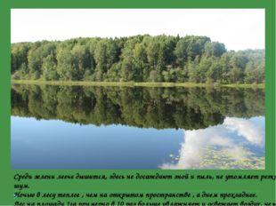 Среди зелени легче дышится, здесь не досаждают зной и пыль, не утомляет резк