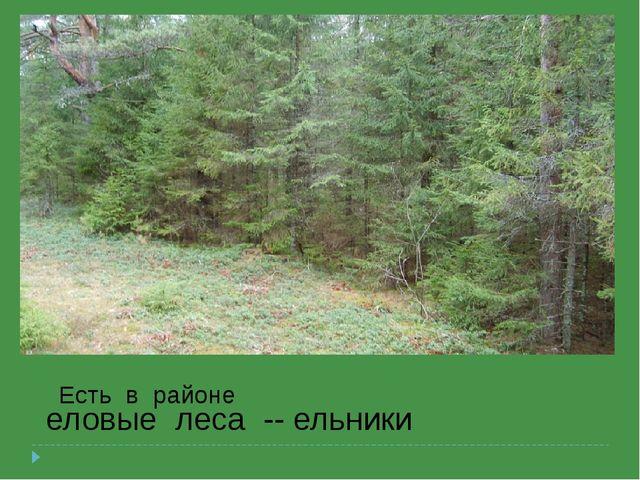 еловые леса -- ельники Есть в районе