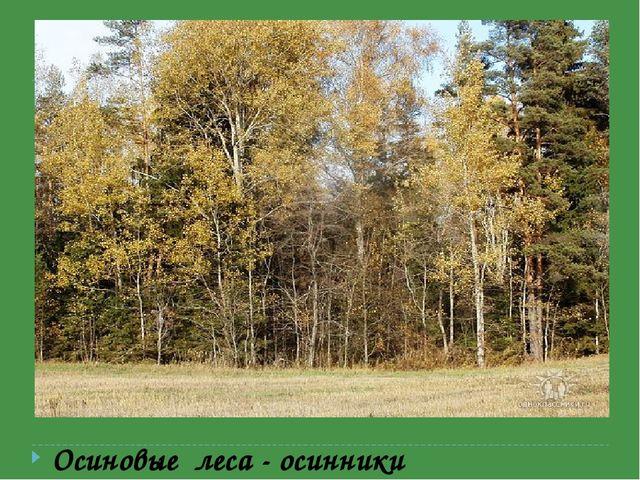 Мелколиственные леса-березняки, осинники, ольшаники. Осиновые леса - осинники