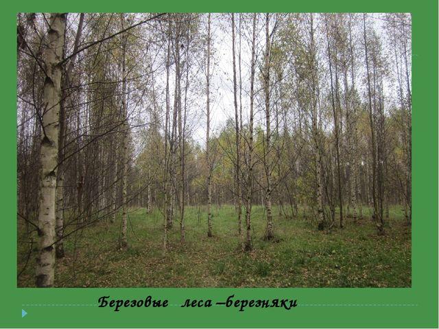 Березовые леса –березняки