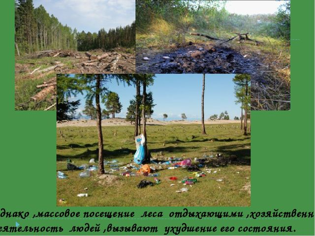 Однако ,массовое посещение леса отдыхающими ,хозяйственная деятельность люде...