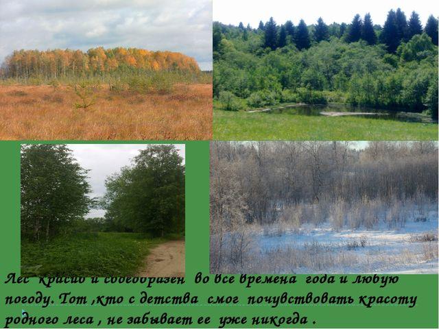 Лес красив и своеобразен во все времена года и любую погоду. Тот ,кто с детст...