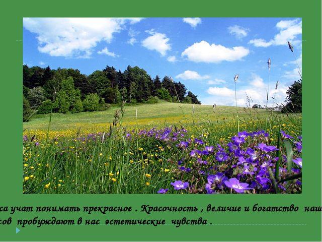 Леса учат понимать прекрасное . Красочность , величие и богатство наших лесов...