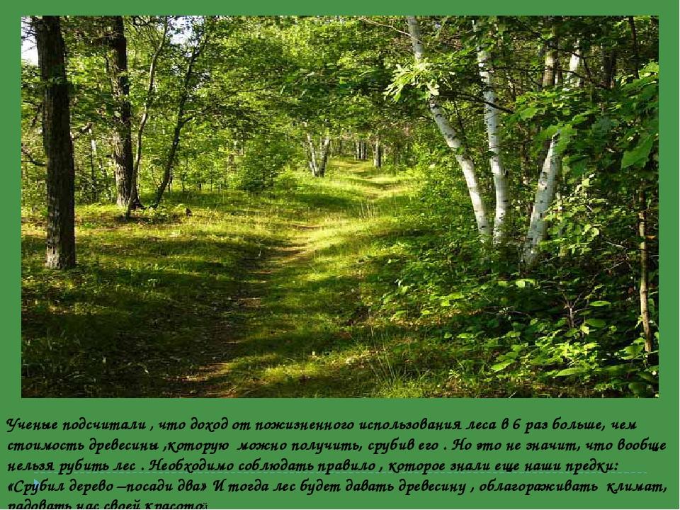 Ученые подсчитали , что доход от пожизненного использования леса в 6 раз боль...