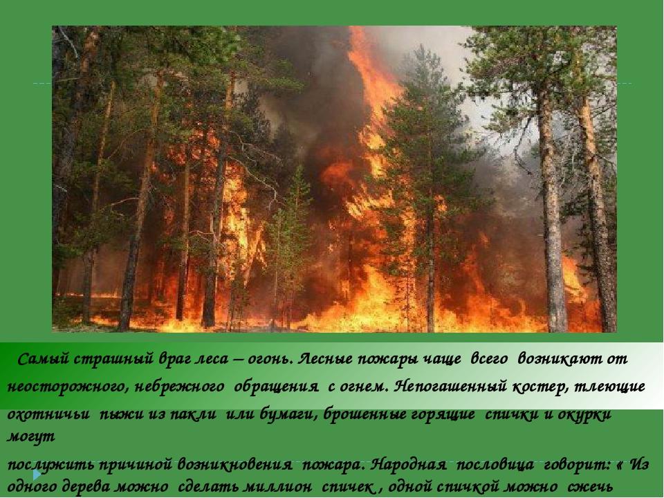 Самый страшный враг леса – огонь. Лесные пожары чаще всего возникают от неос...