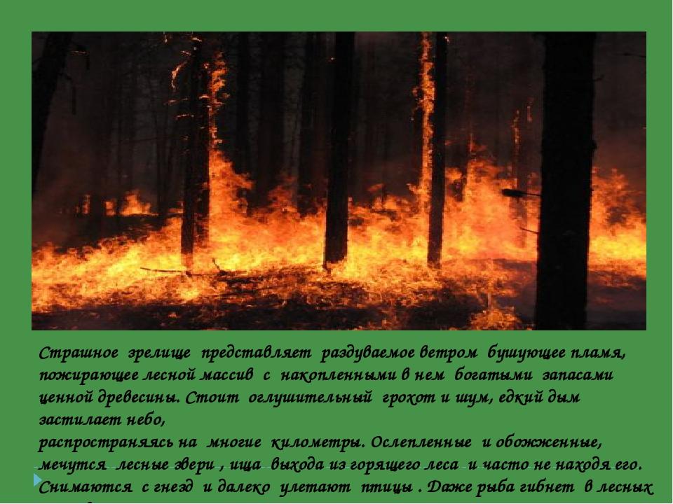 Страшное зрелище представляет раздуваемое ветром бушующее пламя, пожирающее л...