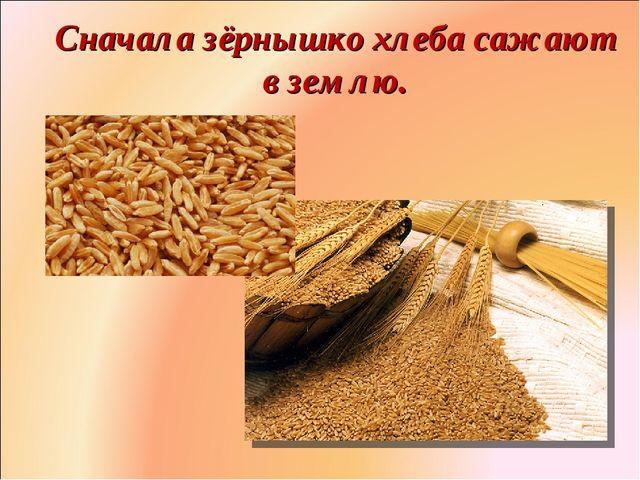 Сначала зёрнышко хлеба сажают в землю. Фролова Ольга Ивановна д/с № 1687