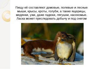 Пищу её составляют домовые, полевые и лесные мыши, крысы, кроты, голуби, а та