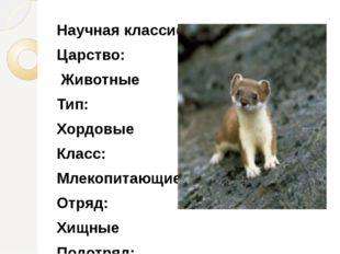 Научная классификация Царство: Животные Тип: Хордовые Класс: Млекопитающие От