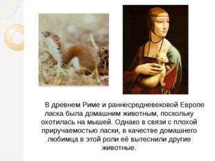 В древнем Риме и раннесредневековой Европе ласка была домашним животным, пос