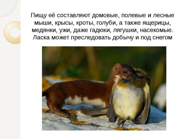 Пищу её составляют домовые, полевые и лесные мыши, крысы, кроты, голуби, а та...