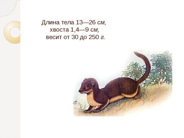 Длина тела 13—26 см, хвоста 1,4—9 см, весит от 30 до 250 г.