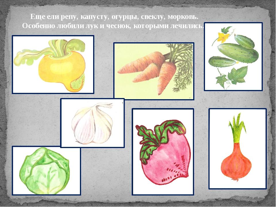 Еще ели репу, капусту, огурцы, свеклу, морковь. Особенно любили лук и чеснок,...