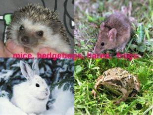 mice, hedgehogs, hares, frogs.