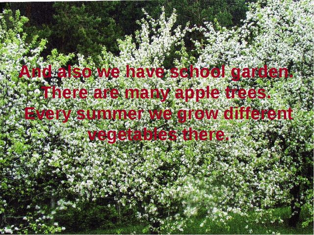 And also we have school garden. There are many apple trees. Every summer we g...